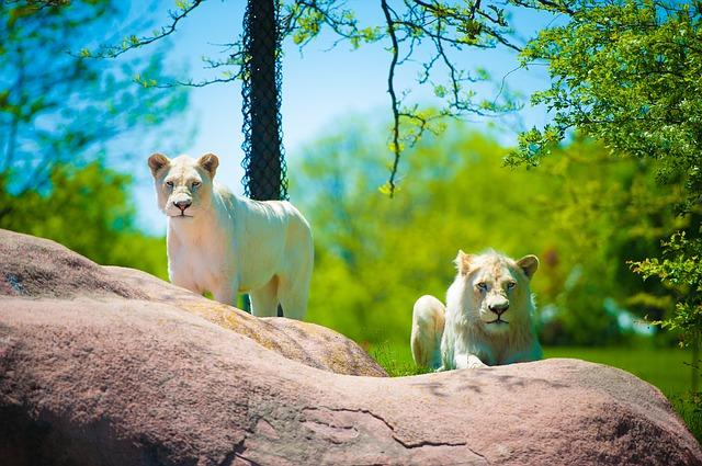 The Toronto Zoo